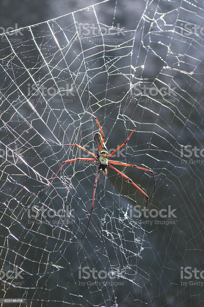 palm spiders stock photo