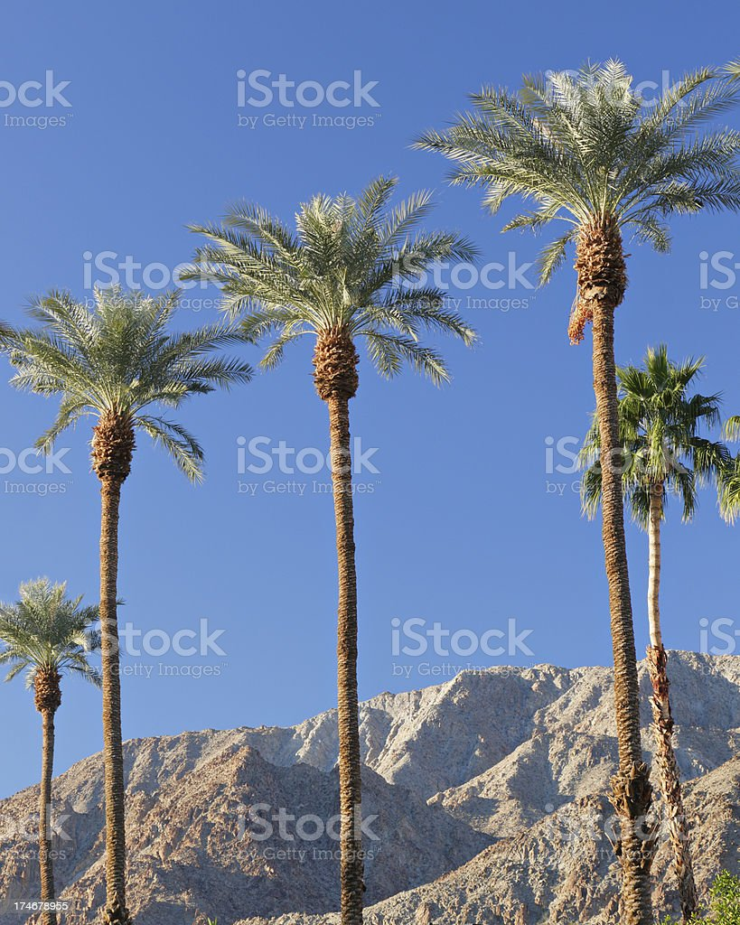 Palm Springs Landscape royalty-free stock photo