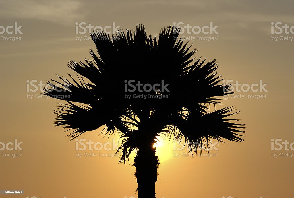 Palm Sunset stock photo