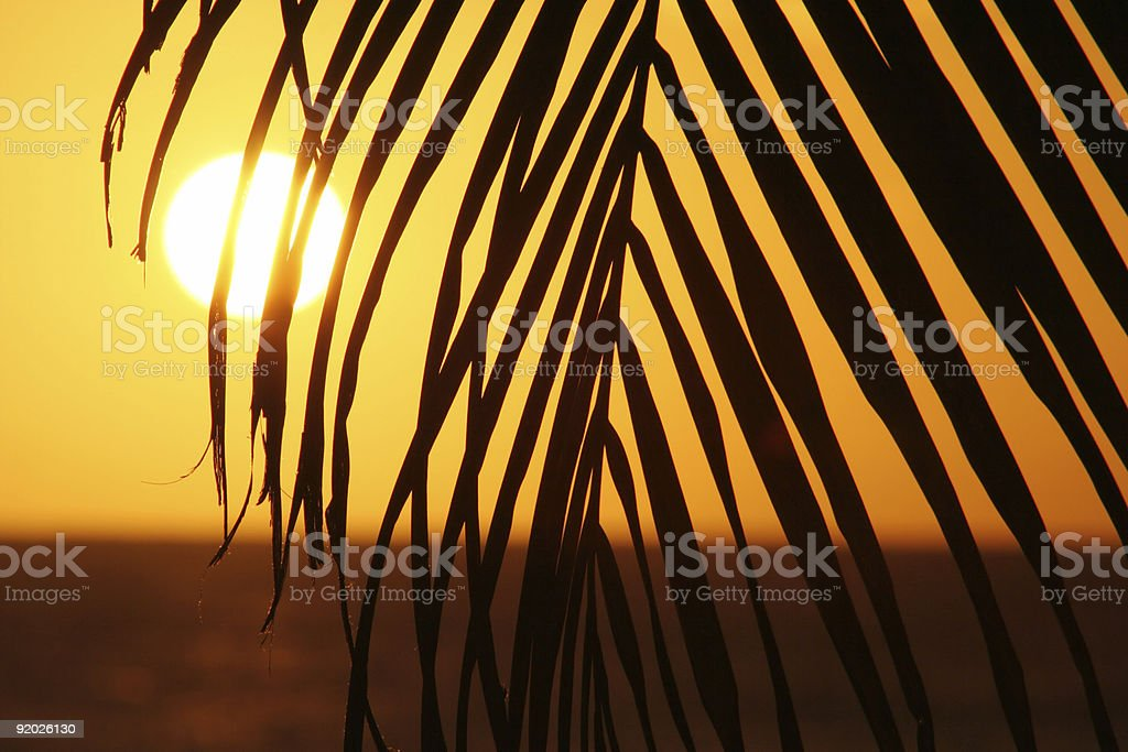 Palm Sunset. royalty-free stock photo