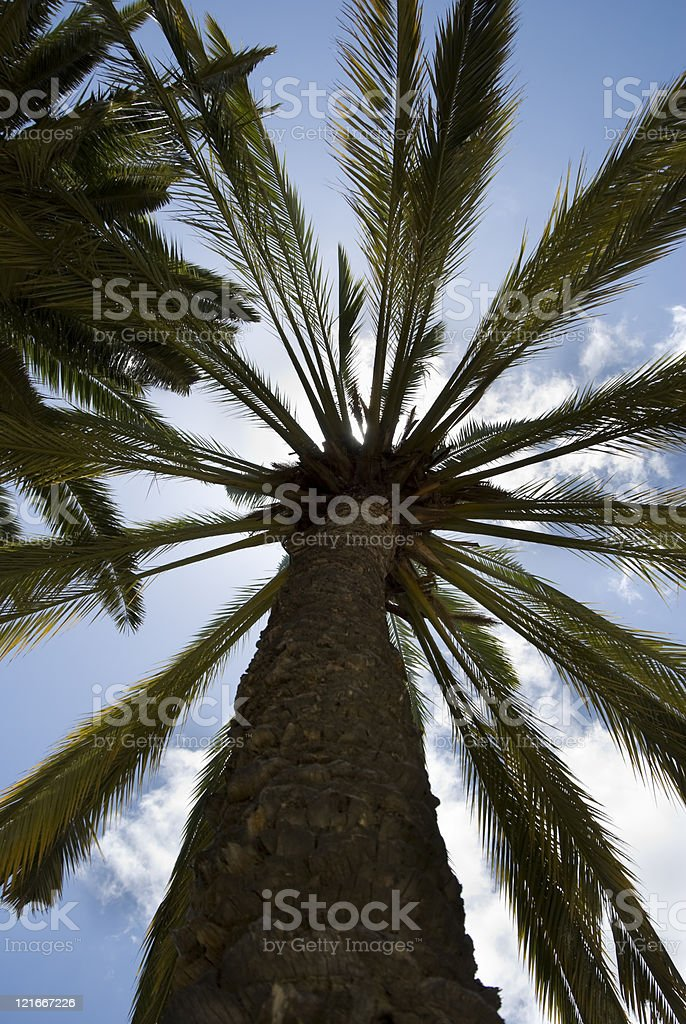 Palm tree against the sun, low angle, tropical plant stock photo