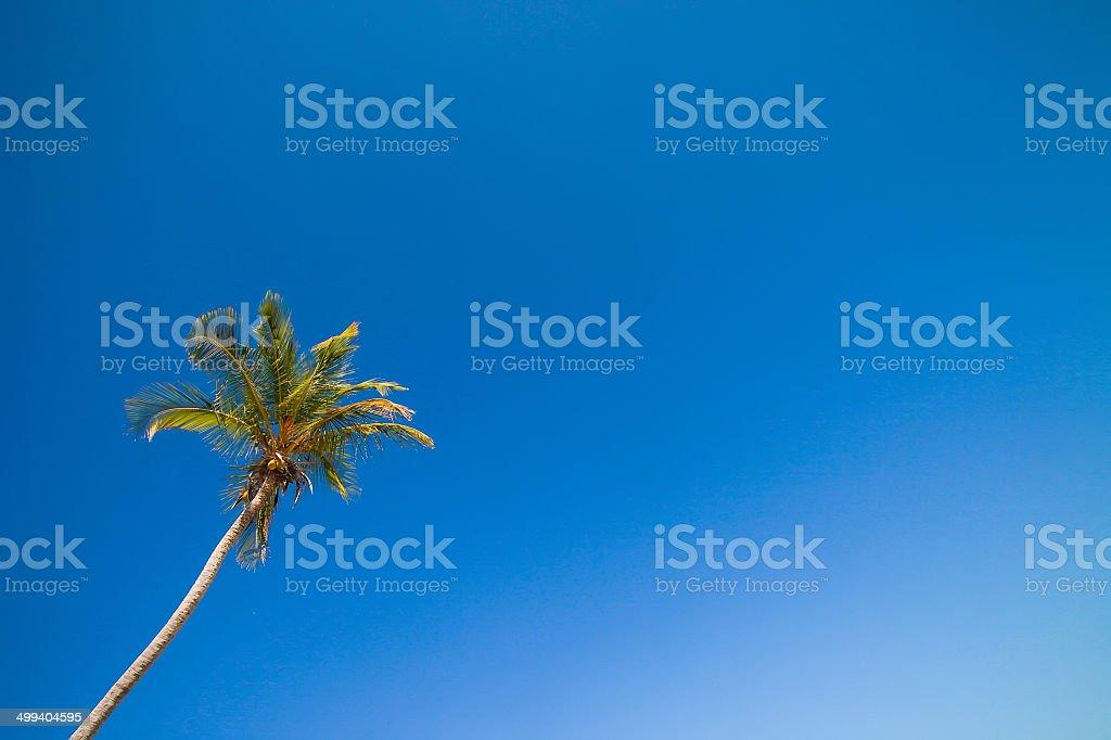Palm tree and a blue sky stock photo