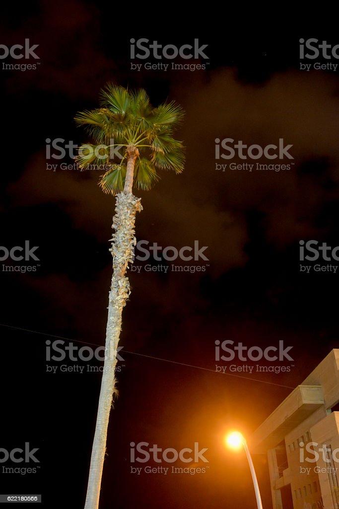 palm tree and a lantern stock photo