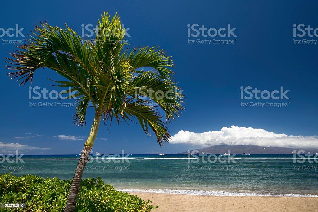 Palm tree and beach. Lahaina, Maui, Hawaii stock photo