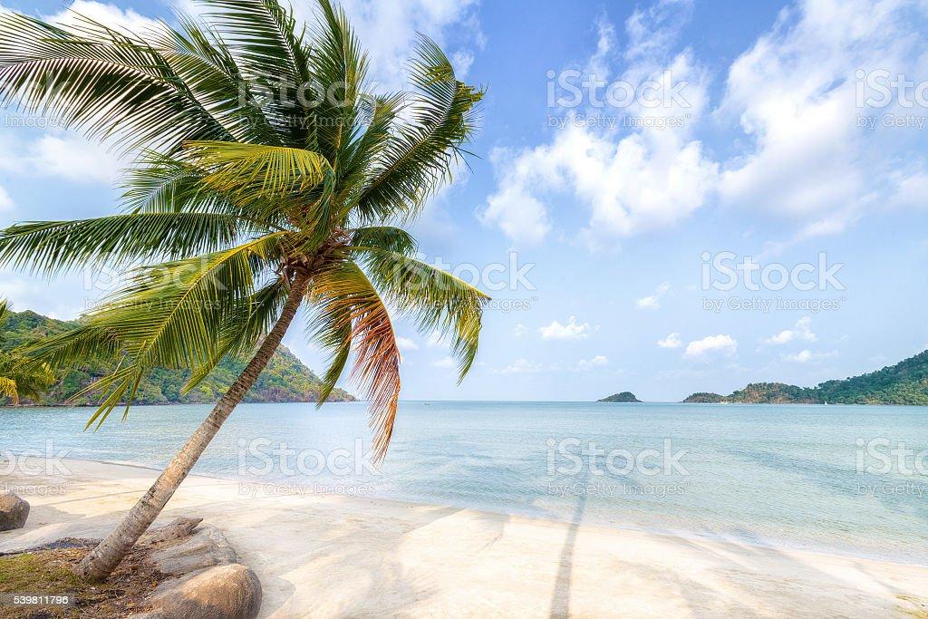 Palm tree and beach on tropical island. stock photo