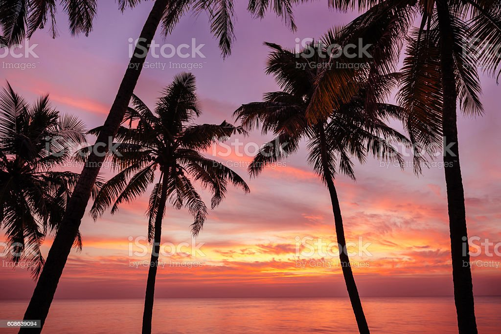 Palm tree and beautiful sunset on the beach stock photo