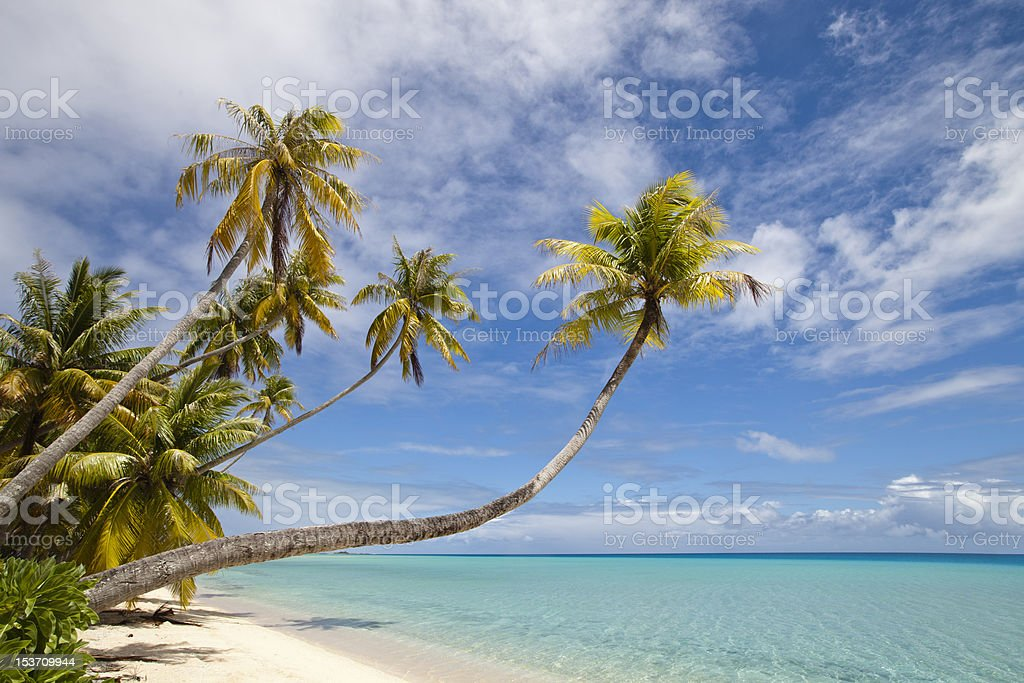 Palm tree and blue lagoon stock photo