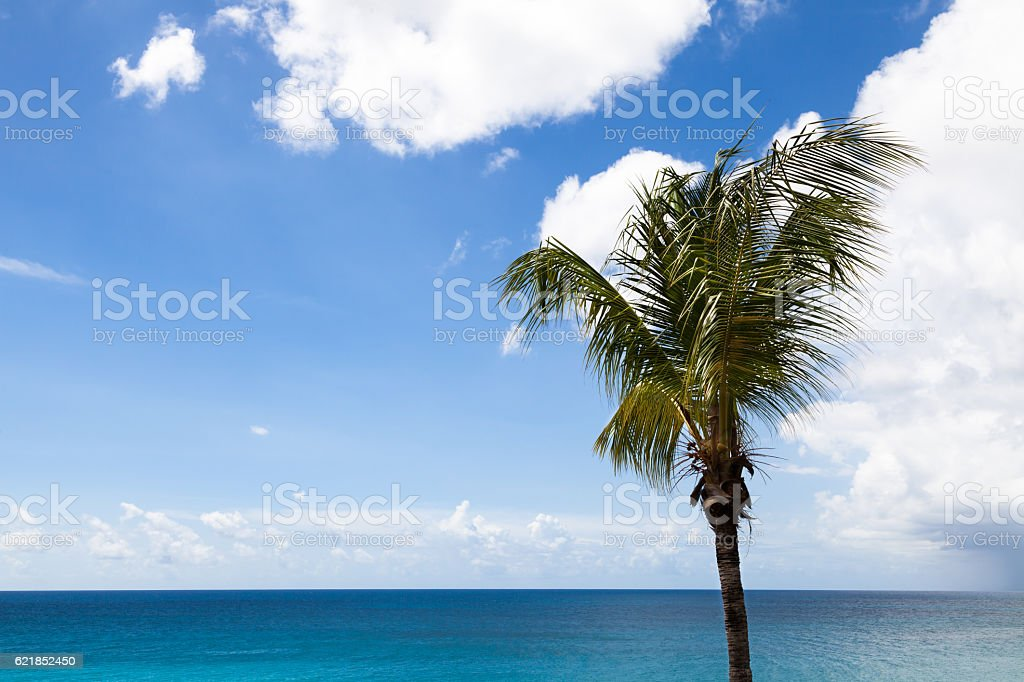 Palm tree and daytime clouds Long Bay stock photo