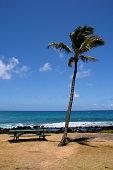 Palm Tree and empty park bench on Kauai, Hawaii