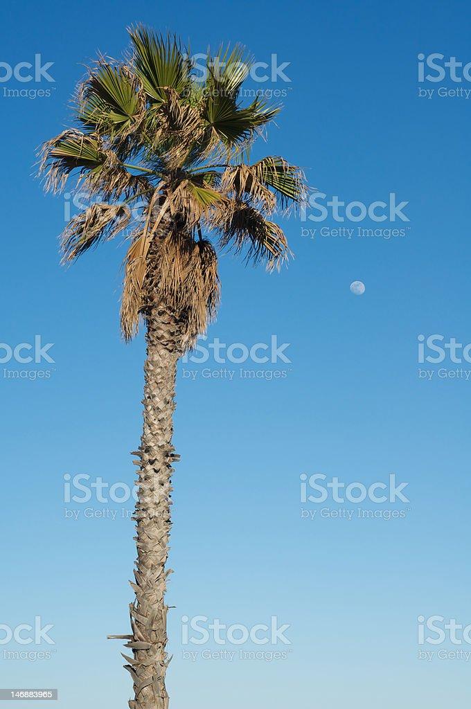 Palm Tree and Moon stock photo
