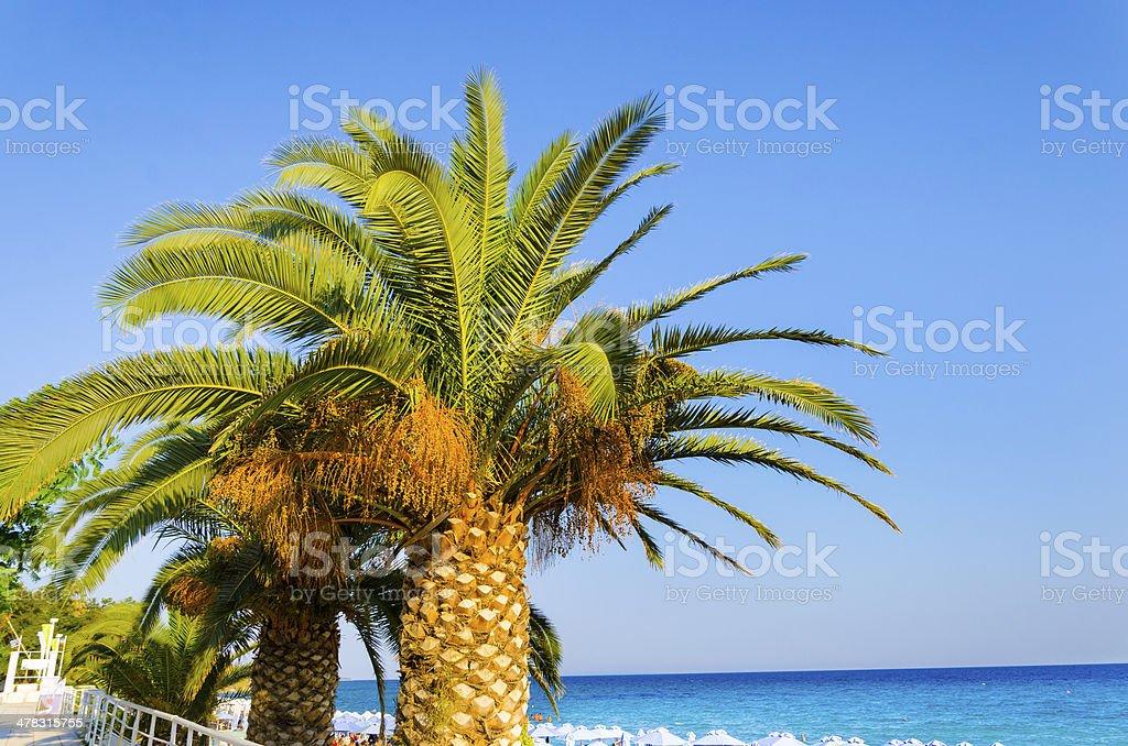 palm tree and ocean horizon wallpaper royalty-free stock photo