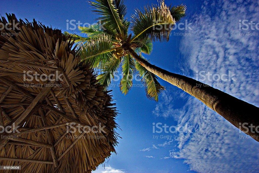 Palm tree and Straw parasol, Varadero, Cuba stock photo