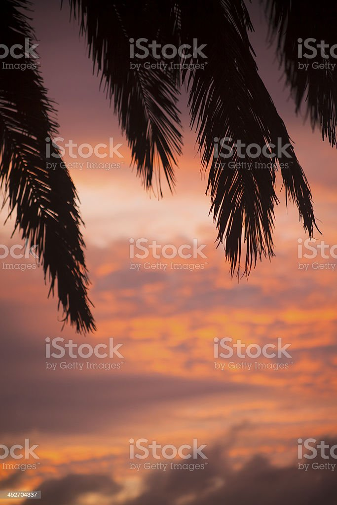 Palm tree and sunset royalty-free stock photo