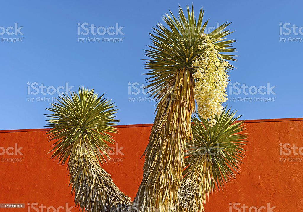 Palm tree and the flowers stock photo