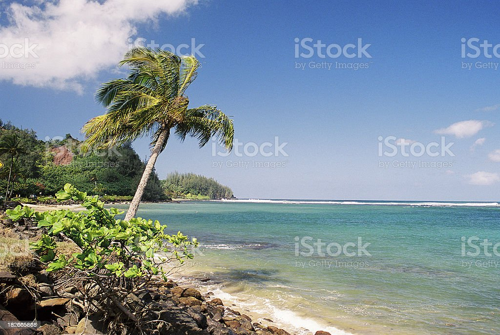 Palm tree and turquoise Hawaii sea royalty-free stock photo