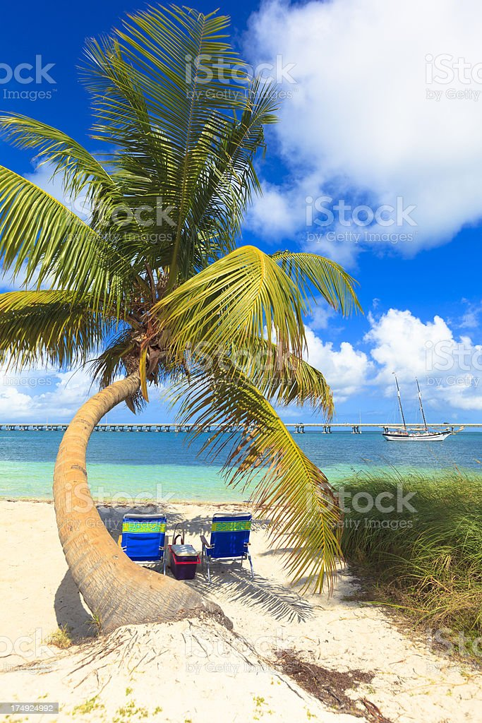 Palm tree and two beach chairs stock photo
