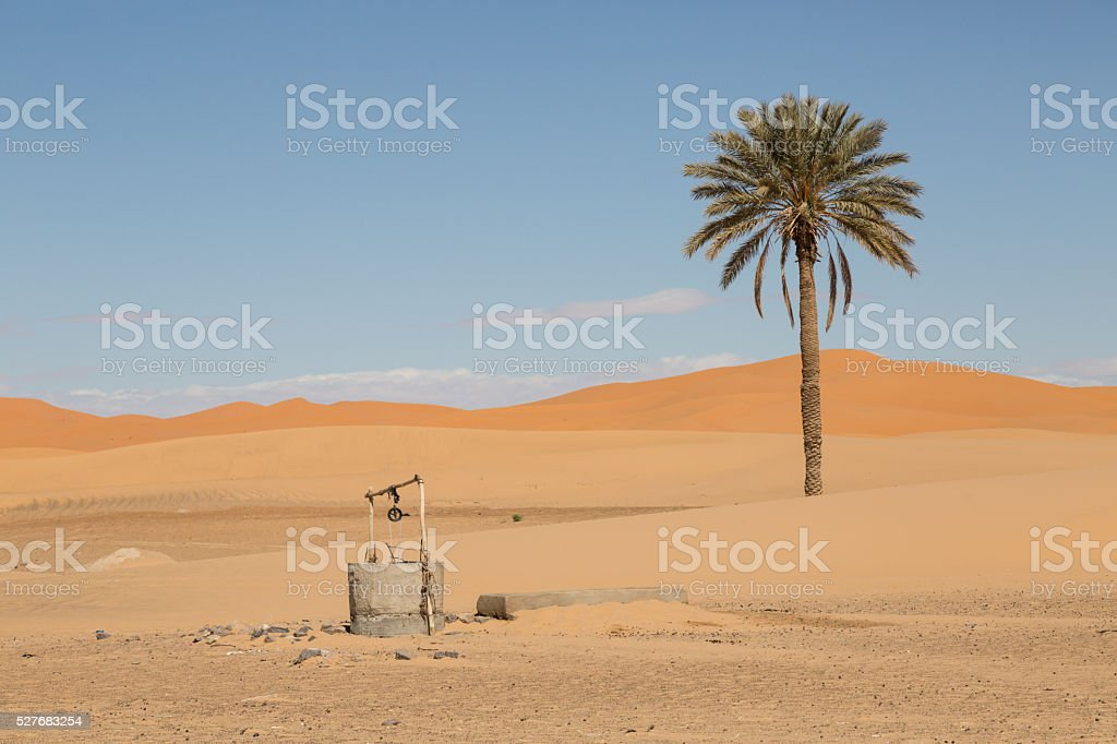 palm tree and well stock photo