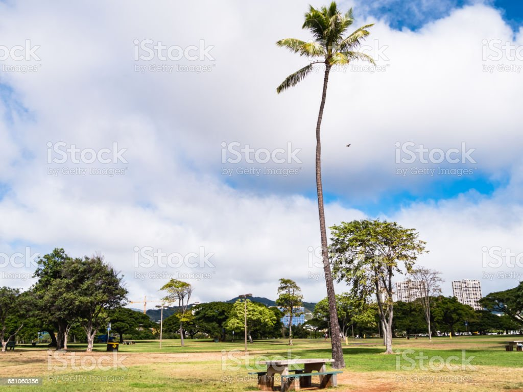 Palm Tree at Ala Moana Beach Park, Waikiki, Honolulu City, Oahu Island, Hawaii. stock photo