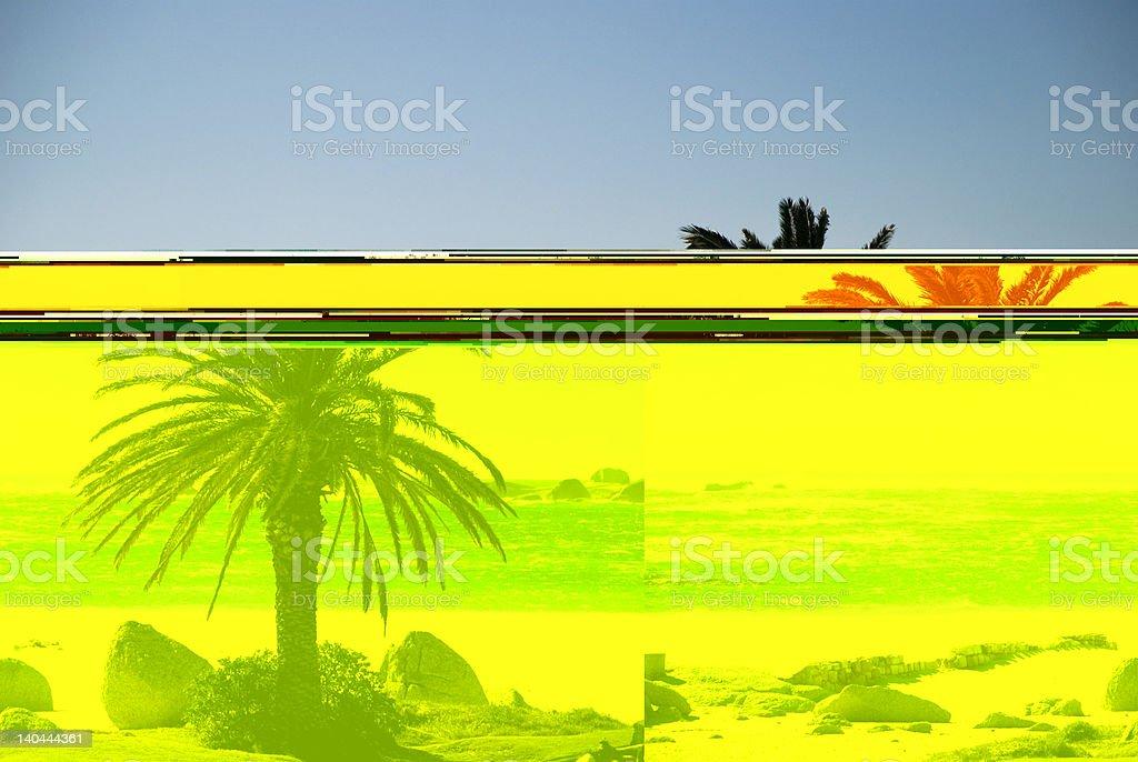Palm Tree at Camps Bay royalty-free stock photo