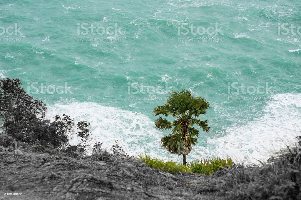 Palm Tree at Cape Phrom Thep stock photo