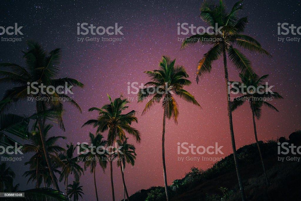 Palm tree at night stock photo