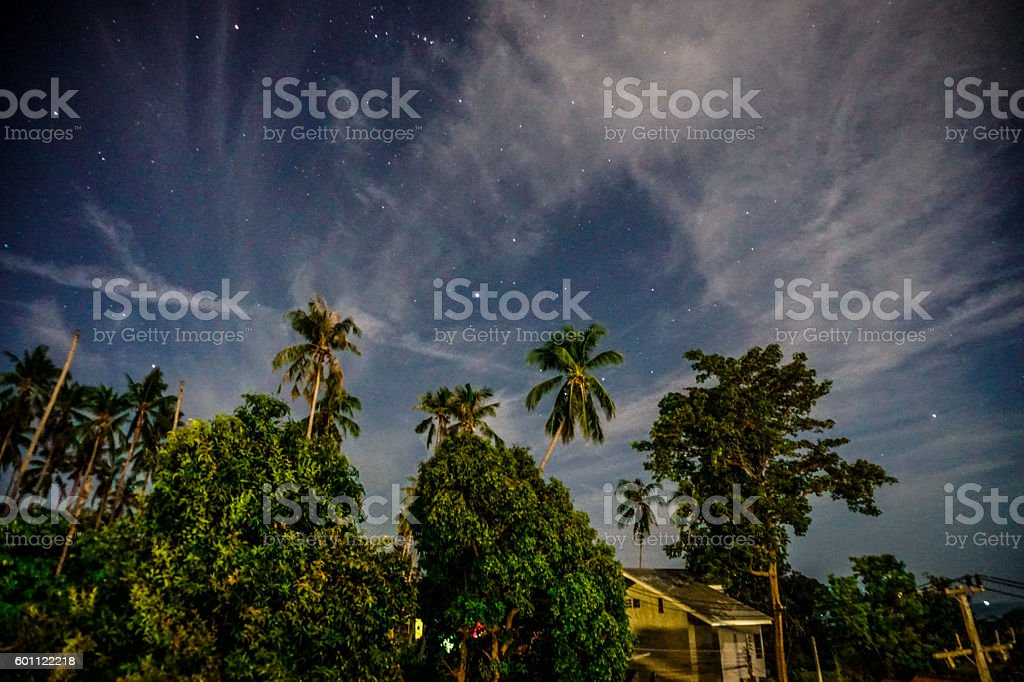 Palm tree at night stock photo