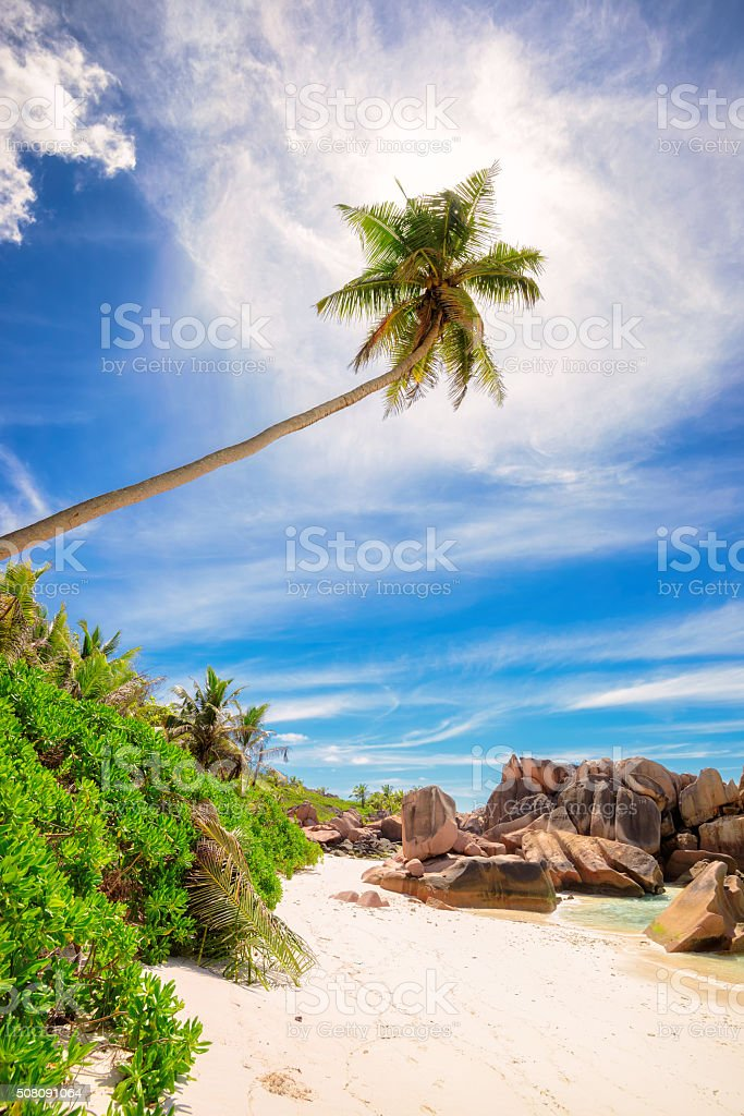 Palm tree at paradise beach of Seychelle stock photo