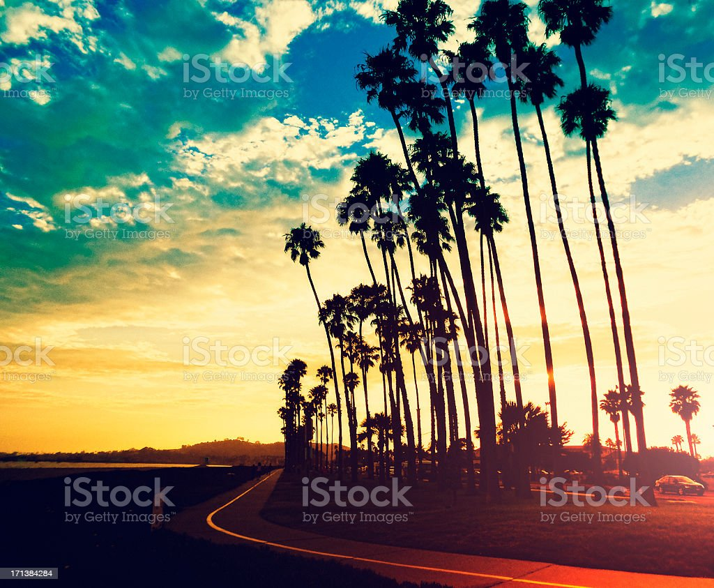 Palm tree at sunset on California - USA royalty-free stock photo