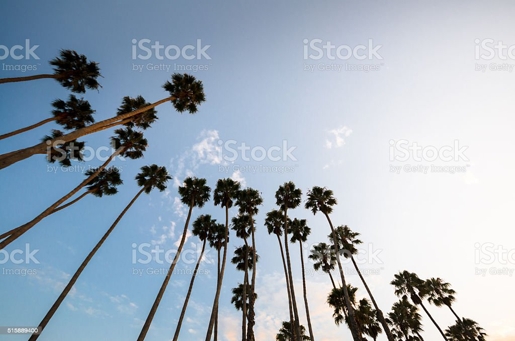 Palm tree at sunset on california - USA stock photo