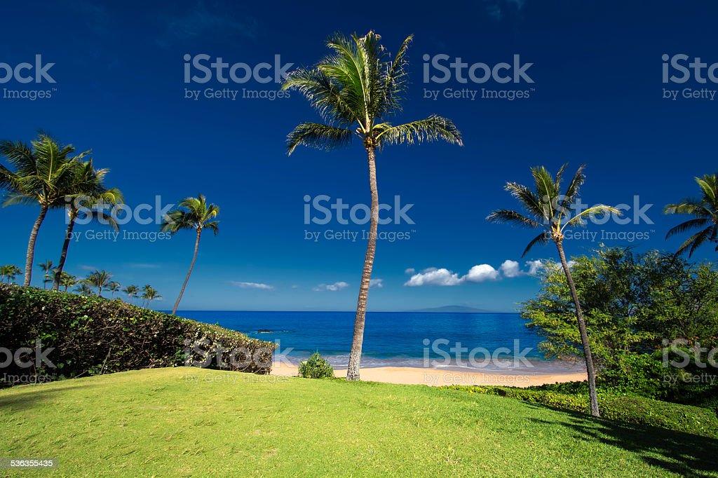 Palm tree at Ulua Beach, south Maui, Hawaii, USA stock photo
