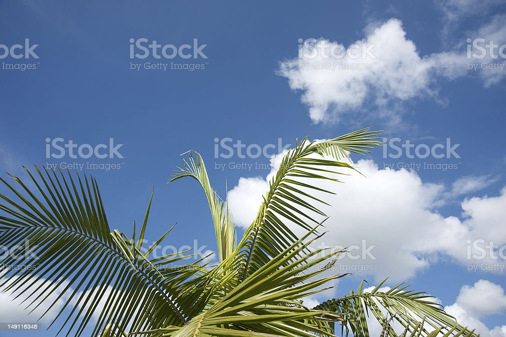 Palm tree background royalty-free stock photo