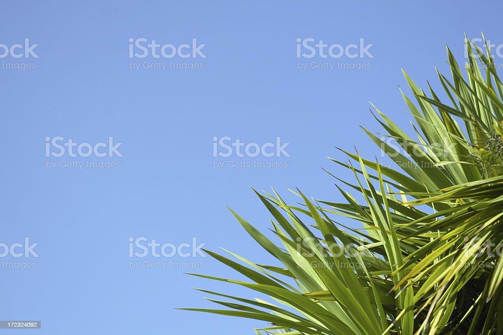 Palm Tree Background royalty-free stock photo
