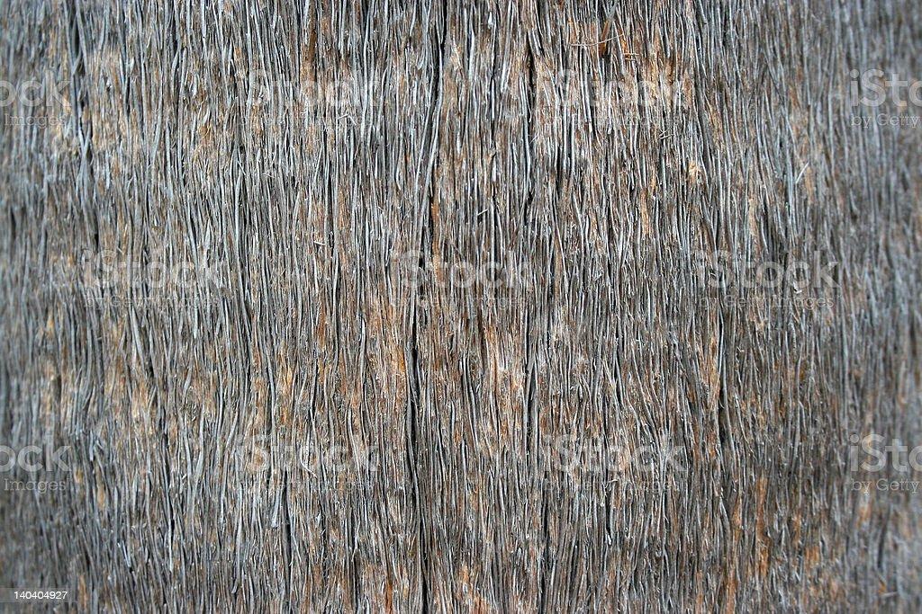 Palm tree bark background royalty-free stock photo