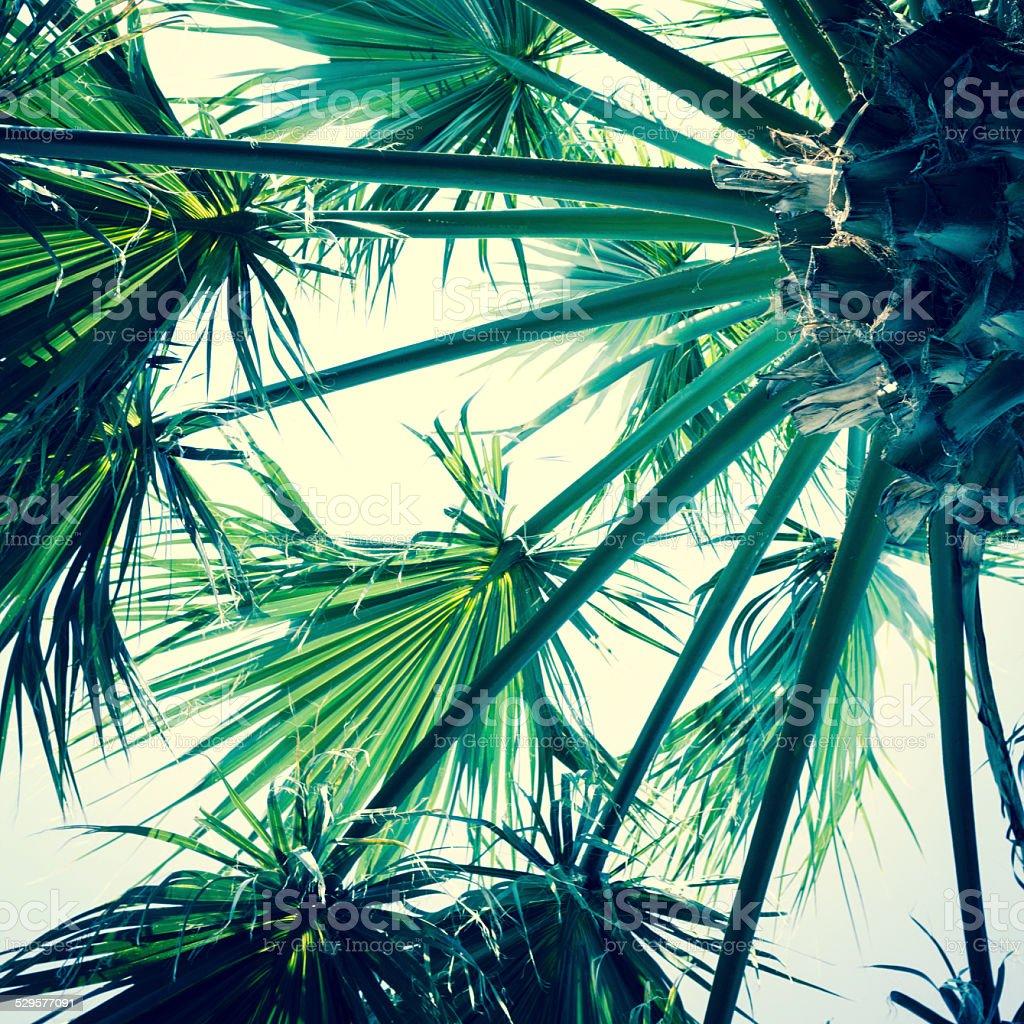 palm tree below stock photo