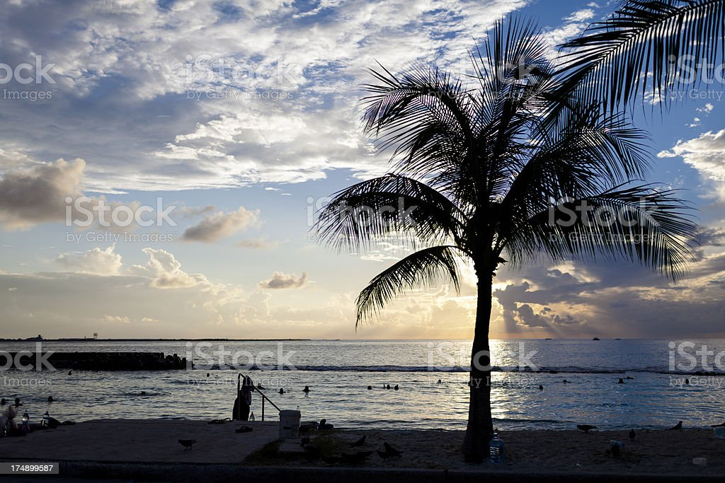 Palm tree beside the sea with dramatic sky background. royalty-free stock photo