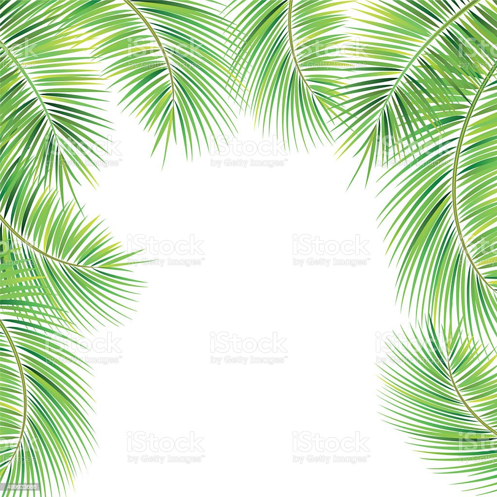 palm tree branches stock photo 499923686 istock