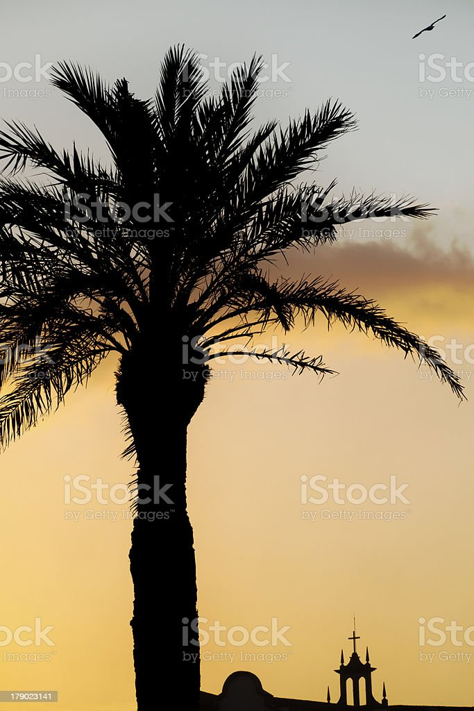 Palm tree, church and seagull royalty-free stock photo