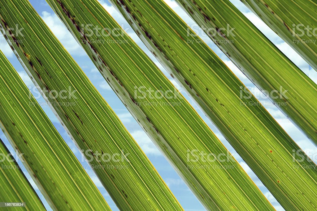 palm tree close background with sky royalty-free stock photo