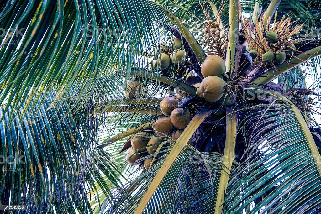 Palm tree detail stock photo
