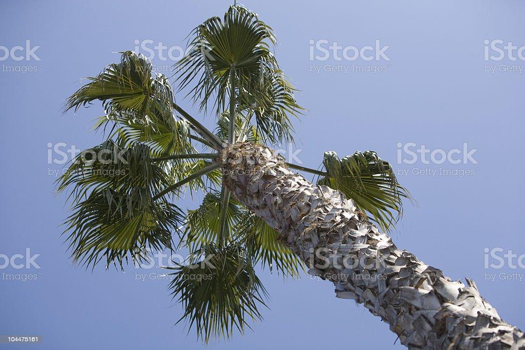 Palm Tree Diagonal Above stock photo