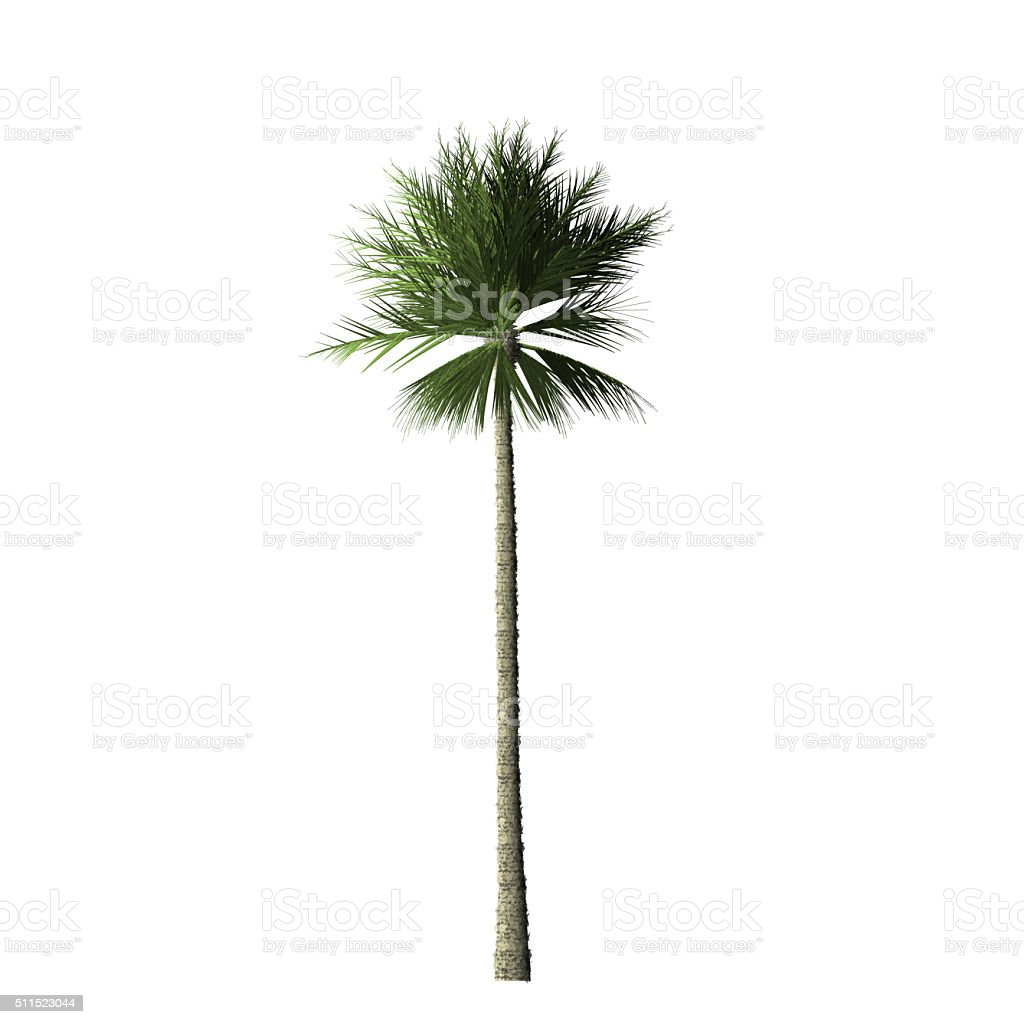 Palm tree - digital painting stock photo