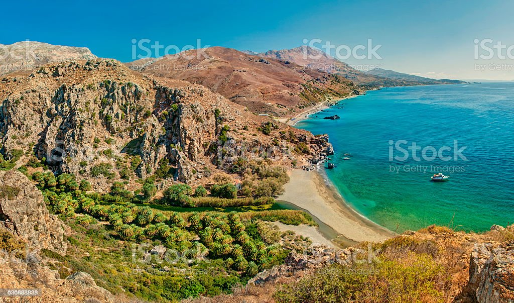 palm tree forest and beach panorama stock photo
