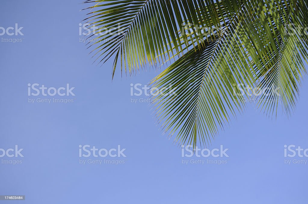 Palm tree frame royalty-free stock photo