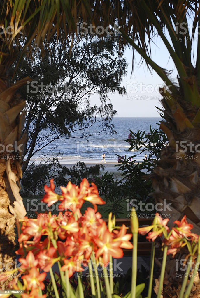 Palm Tree framing Ocean View stock photo