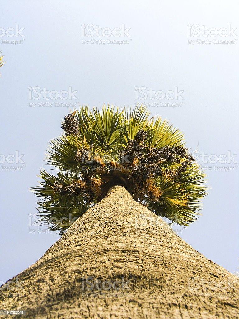 Palme aus dem Boden Lizenzfreies stock-foto