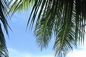 Palm tree fronds against blue sky