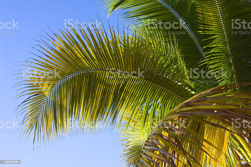 Palm tree fronds and sky in a tropical paradise royalty-free stock photo