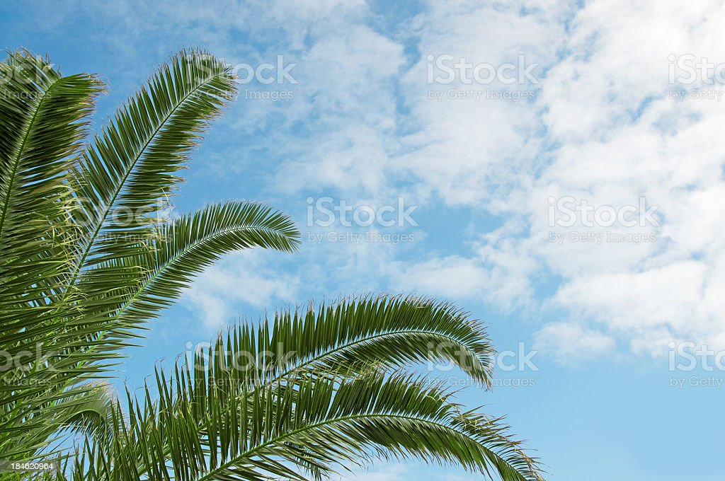 Palm Tree Fronds royalty-free stock photo