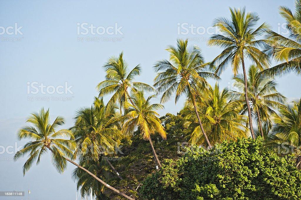 Palm Tree Grove stock photo