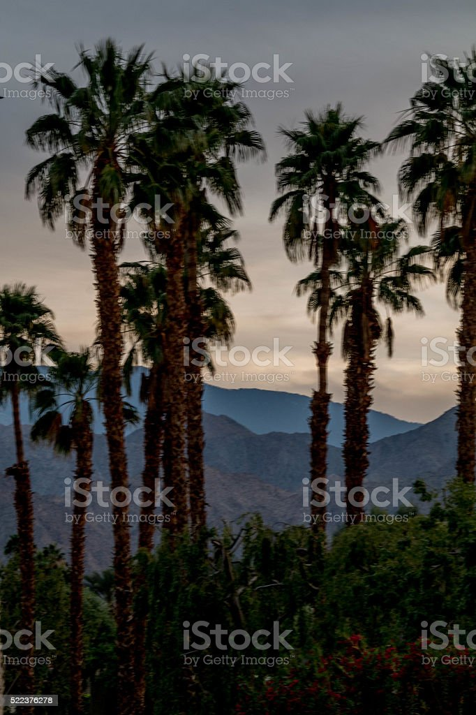 Palm tree grove stock photo